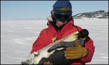 วิกฤติแล้ว! โลกร้อน ลูกเพนกวินแข็งตาย