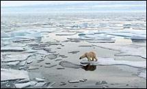 ขั้วโลกเหนืออาจไม่มีน้ำแข็งเหลืออยู่ใน1 ปีนี้