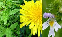 ประโยชน์ของดอกไม้ช่วยคลายความเครียด
