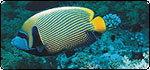 ประกวดภาพถ่าย ปลาสวยงาม ชิงถ้วยพระราชทาน