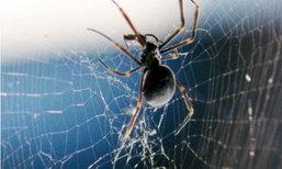 """3 วิธีธรรมชาติ กำจัด """"ใยแมงมุม"""" ปัญหากวนใจ"""