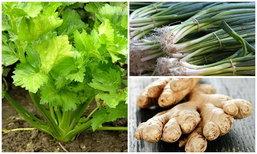 """6 พืชผักสมุนไพร โตและกินได้ทันใจ เพียงแค่ """"ตัด ปัก"""""""