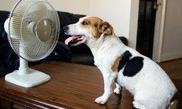 """11 ทริคไม่ใช้แอร์ ช่วย """"บ้าน"""" คลายร้อนในช่วง """"Heat wave"""""""