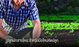 ปลูกผักสายไหน สำหรับมือใหม่หัดปลูก