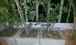 การทำน้ำหยดง่ายๆ สำหรับคนรักต้นไม้ และต้องกลับบ้านหลายวัน