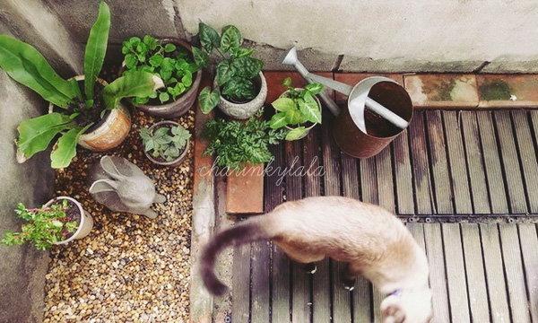 """สวนนี้เพื่อแมวเหมียว """"สวนเล็กสำหรับเจ้าสี่ขาที่รัก"""" ฉบับปรับปรุงใหม่"""