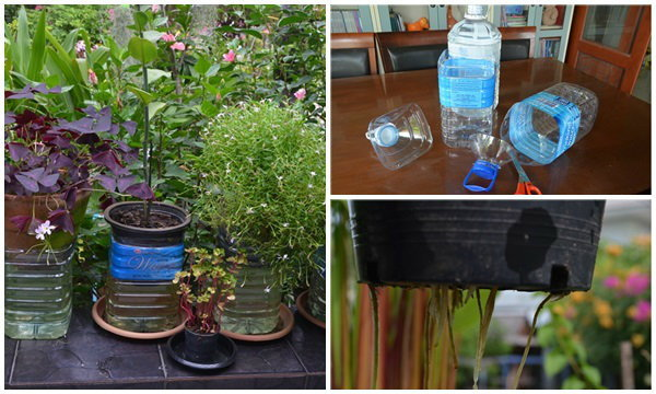 """DIY ขวดน้ำช่วยชีวิต """"ต้นไม้"""" เมื่อต้องหยุดยาวปีใหม่"""