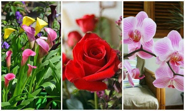 """เลือก """"ดอกไม้ """"สื่อความหมายเพื่อ """"คนที่เรารัก"""""""
