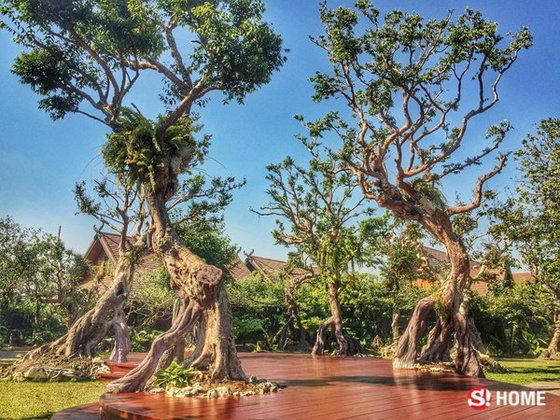 ทิศไหน ควรปลูกต้นไม้อะไร รู้แล้วหรือยัง ?