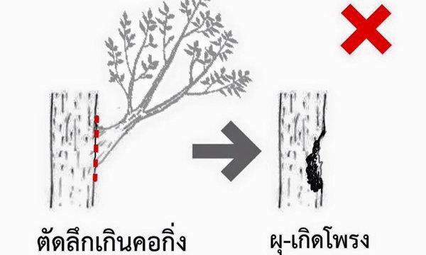 รวมวิธีตัดต้นไม้อย่างไรให้ต้นไม้สุขภาพดี ไม่ล้มทับเป็นอันตรายคนอื่น