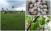 เปลี่ยนที่ดินว่างเปล่า 2 ไร่ เป็นสวนผสมมีผัก ผลไม้ ไข่กินทุกวัน
