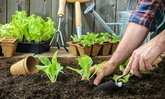 5 ข้อคู่มือปลูกผักสวนครัวแบบกินได้จริง