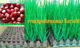 ไอเดียการปลูกต้นหอมแดงในถาดไข่ ไม่ต้องง้อดิน ง่ายๆ ไว้ทานในครอบครัว