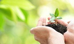 7 ขั้นตอนถอนต้นไม้โดยไม่ให้ต้นไม้ตาย