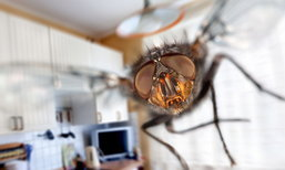 13 สิ่งที่คุณอาจไม่รู้ว่าเป็นตัวล่อแมลงเข้าบ้าน