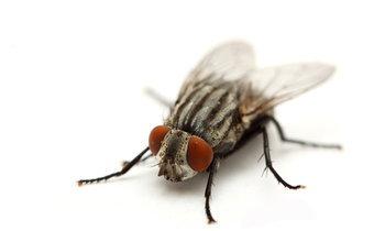 5 วิธีกำจัดแมลงวัน แขกไม่ได้รับเชิญ ที่แสนน่ารำคาญ