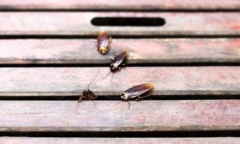 5 วิธีกำจัดแมลงในบ้านแบบประหยัด เป็นธรรมชาติ
