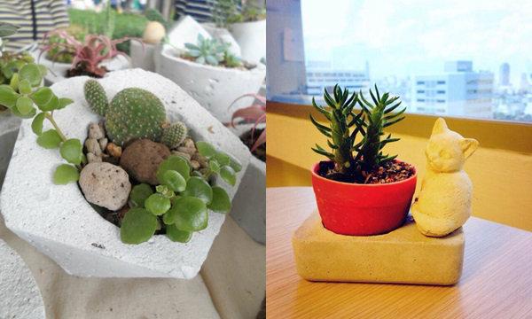 """Little Garden"" พื้นที่สีเขียว เพื่อสวนเล็กๆ ในบ้าน"