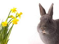 กระต่ายตามความเชื่อของจีน