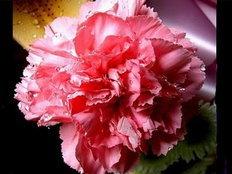 ดอกไม้ประจำเดือนเกิด