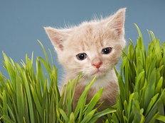 ฝันถึงแมว แล้วจะเกิดอะไรขึ้น!!