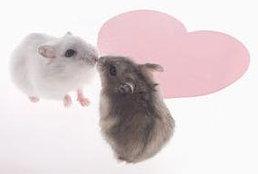 ทายนิสัย : จูบทายนิสัย