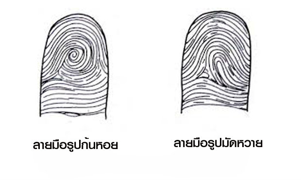 ดูลายมือจากรูปก้นหอยในนิ้ว