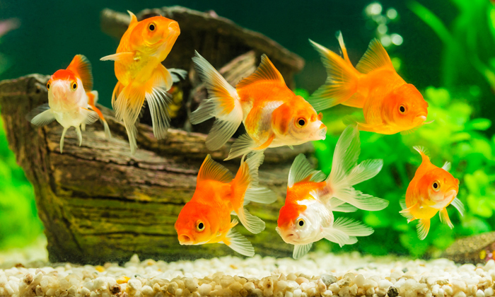 """จัด """"ตู้ปลา"""" ถูกหลักฮวงจุ้ยเสริมความร่ำรวย"""