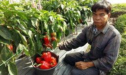 พลิกวิกฤตเจ๋ง เกษตรทางเลือกปลูก'พริก-แอปเปิล'สู้แล้ง โกยรายได้งาม