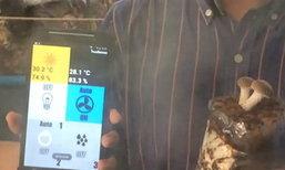 สามหนุ่มเจ๋ง ! ทำแอพฯ มือถือคุมโรงเพาะเห็ด อาชีพเสริม เงินดี แจกแอพฯ ฟรีอีกต่างหาก