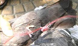 กรมปศุสัตว์เร่งพ้นฆ่าเชื้อต้านโรคไข้หวัดนก
