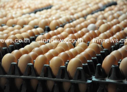 พณ.เผยราคาไข่ไก่วันนี้ปรับเพิ่มฟองละ20สต.
