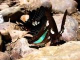 ลำคลองงู กาญจนบุรี