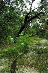 ป่าไม้ในป่าดงนาทาม